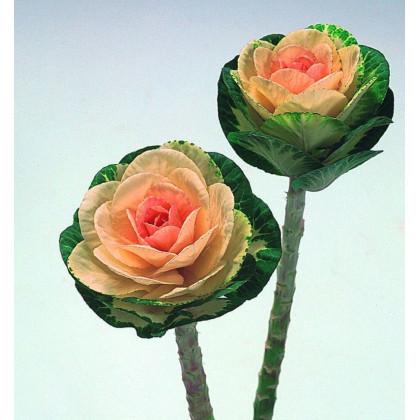Okrasná kapusta Sunrise - Brassica Oleracea - predaj semien - 20 ks