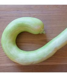 Cuketa Tromba d Albenga - Cucurbita moschata - tekvica - semená - 6 ks