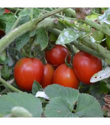 Paradajky Mini kolíkové - Lycopersicon lycopersicum - rajčiak - semená - 20 ks