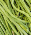 Vigna čínska Metro - Vigna sinensis - fazuľa - semená - 40 ks