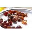 Paradajka Brown Berry - semená rajčiaka - 7 ks