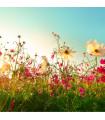 Letničky zmes - romantická záhrada - semená letničiek - semiačka - 0,9 gr