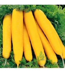 Mrkva Jaune du doubs - Daucus carota - semená - 1 g
