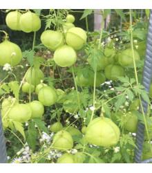 Balónovec nafúknutý Ballonwein - Cardiospermum halicacabum - semená - 15 ks