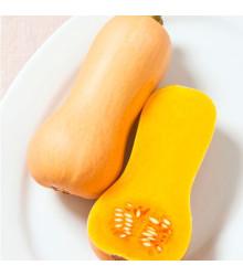 Bio tekvica muškátová Butterscotch F1 - Cucurbita moschata - dyňa - semená - 5 ks