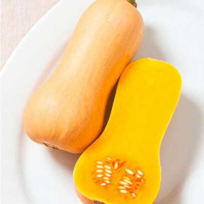 BIO tekvica muškátová Butterscotch F1 - Cucurbita moschata - dyňa - bio semená tekvice - 5 ks