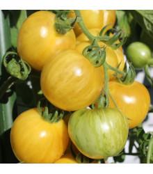BIO paradajka kolíková Topaz - Lycopersicon esculentum - rajčiak - semená - 6 ks