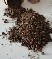 Špeciálny substrát na buxus - substrát na pestovanie zo semien - 100 gr