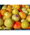Rajčiaková paprika Nagykuti - Capsicum annuum - semená - 7 ks