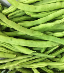 BIO fazuľa kríčková Speedy - Phaseolus vulgaris - bio semená - 15 ks