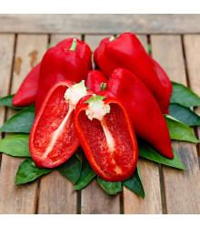 Paprika Snackling Red F1 - Capsicum annuum - semená - 5 ks