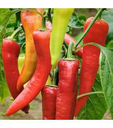 BIO paprika Sweet Dreams - Capsicum annuum - bio semená papriky - 10 ks