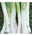 Pór Hannibal - bio semená - 0,1 g
