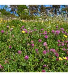 Lúka na suchú pôdu - kvetnatá - semená - 10 g