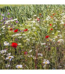 Lúčne kvety pre obohatenie porastu - semená - 10 g