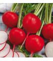 Reďkovka Riesenbutter - maslová obria - semená reďkovky - semiačka - 100 ks
