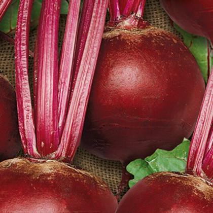 Cvikla šalátová Pablo F1 - červená repa guľatá - Beta vulgaris - semená - 50 ks