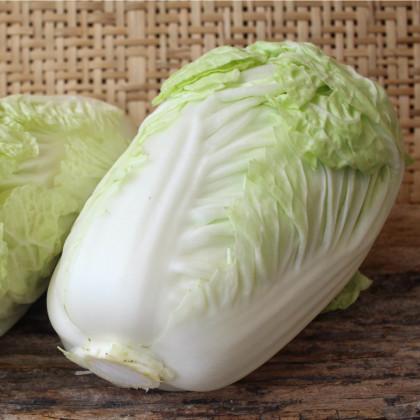 Kapusta pekingská Granaat - Brassica pekinensis - semená kapusty - semiačka - 0,8 gr