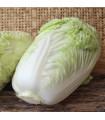 Kapusta pekingská Granaat - Brassica pekinensis - semená - 200 ks