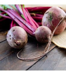BIO cvikla šalátová Chioggia - červená repa - Beta vulgaris - bio semená repy - 40 ks