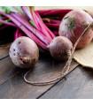 BIO Repa šalátová Chioggia - Beta vulgaris - BIO semená - 40 ks