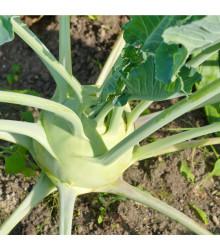 BIO kaleráb obrí Superschmelz - Brassica oleracea - bio semená kalerábu - 50 ks
