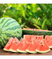 BIO melón vodový Sugar baby - Citrullus lanatus - bio semená melóna - 6 ks