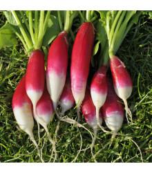 BIO Reďkev Francúzske raňajky - Raphanus sativus - bio semená - 80 ks