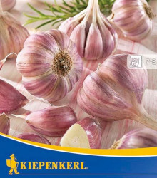 Sadbový cesnak Germidour - nepaličiak - Allium sativum - cibuľky - 3 ks