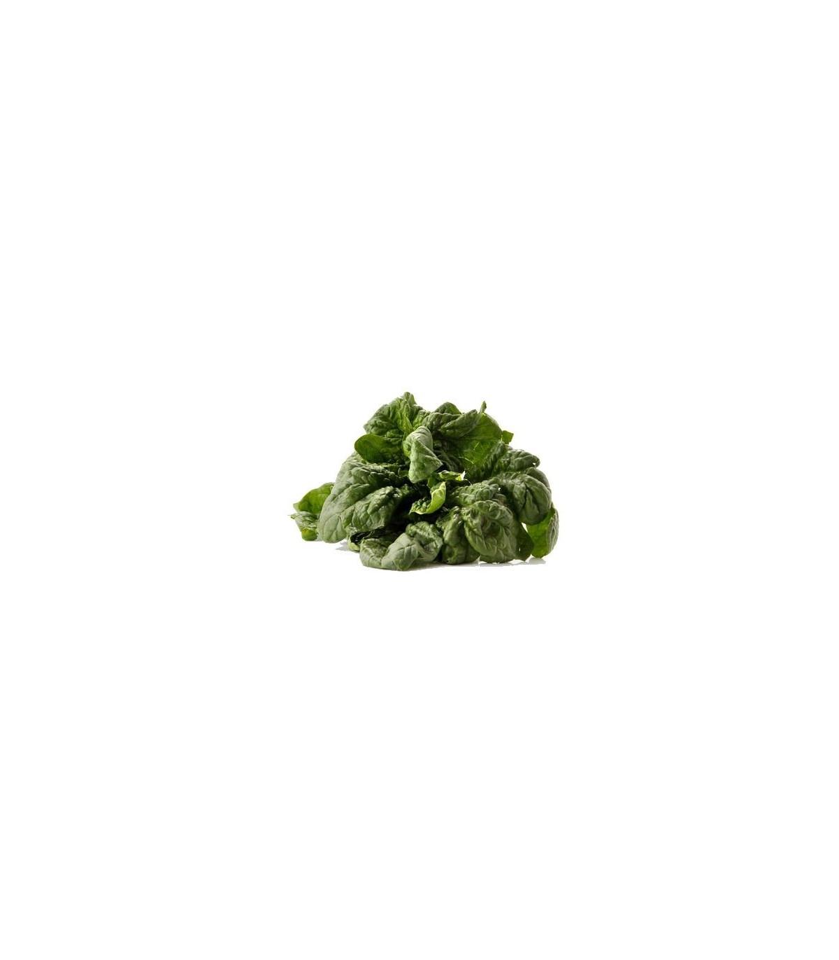 Špenát siaty- Spinacia oleracea- semená- 300 ks