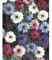 Černuška damašská - rastlina Nigella damascena - predaj semien - 25 ks