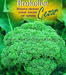Brokolica Cezar - Brassica oleracea - semená brokolice - semiačka - 0,6 g