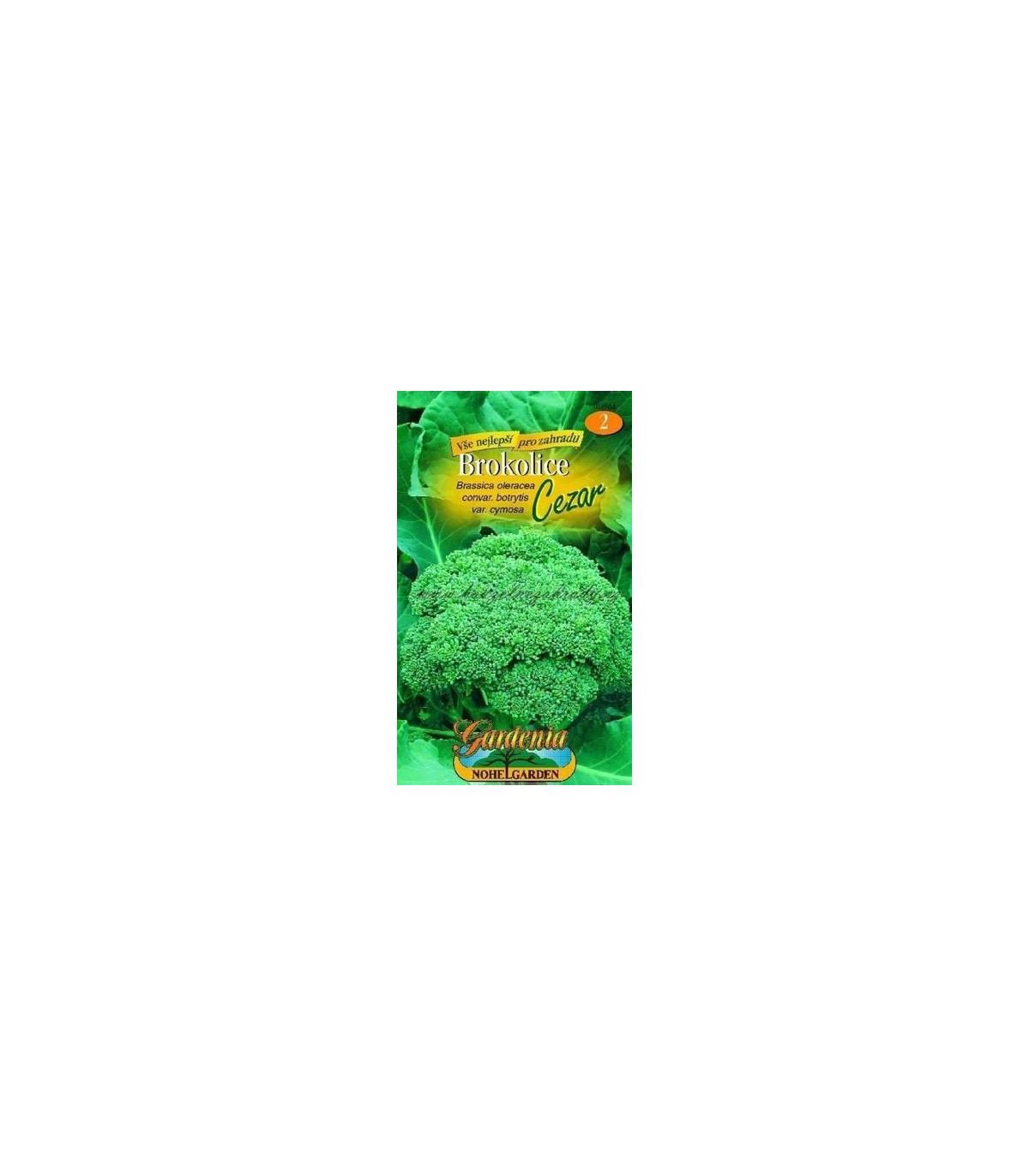 Brokolica Cezar- Brassica oleracea- semená- 120 ks