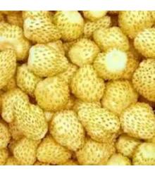 Jahoda mesačná Yellow Wonder - Fragaria vesca - semená - 0,1 g