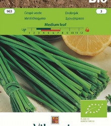 Bio Pažítka Medium Leaf - Allium schoenoprasum L. - bio semená - 1 g