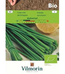 Bio pažítka Medium Leaf - Allium schoenoprasum L. - bio semená pažítky - 1 g