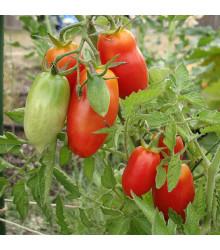 BIO paradajka San Marzano - Lycopersicon esculentum - rajčiak - semená - 7 ks