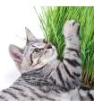 Tráva pre mačky-semená trávy pre mačky-4