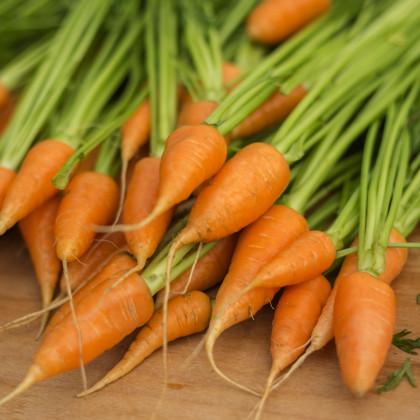 Mrkva Chantenay - Daucus carota - semená - 500 ks
