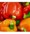 Paprika Babybell červená - Capsicum annuum - semená - 10 ks