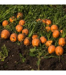 Mrkva guľatá na rýchlenie - Pariser Markt - semená mrkvy - semiačka - 900 ks