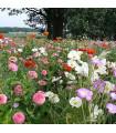 Lúka Lednická radosť - letničková zmes - semená - 20 g
