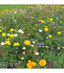 Lúka Plzenská kvetnica - letničková zmes - semená - 20 g