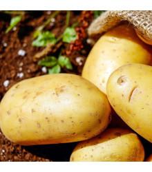 Sadbové zemiaky Carrera - Solanum tuberosum - žlté skoré - 5 kg