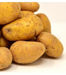 Sadbové zemiaky Sunshine C2 - Solanum tuberosum - žlté skoré - 5 kg