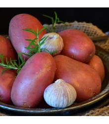 Sadbové zemiaky Rosara - Solanum tuberosum - červené skoré - 5 kg