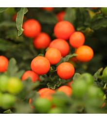 Baklažán okrasný Jupiter - Solanum pseudocapsicum - semená okrasného baklažánu - 10 ks