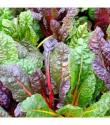 Substral na okrasné rastliny proti škodcom a chorobám - ochrana rastlín - 800 ml