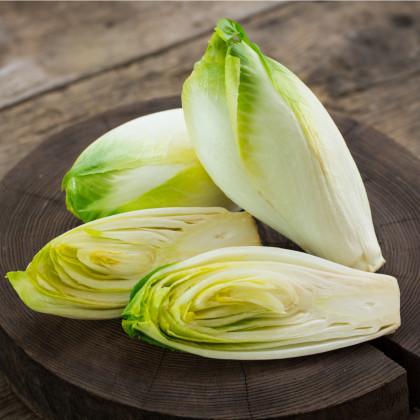 Čakanka šalátová - Cichorium intybys - semená - 180 ks