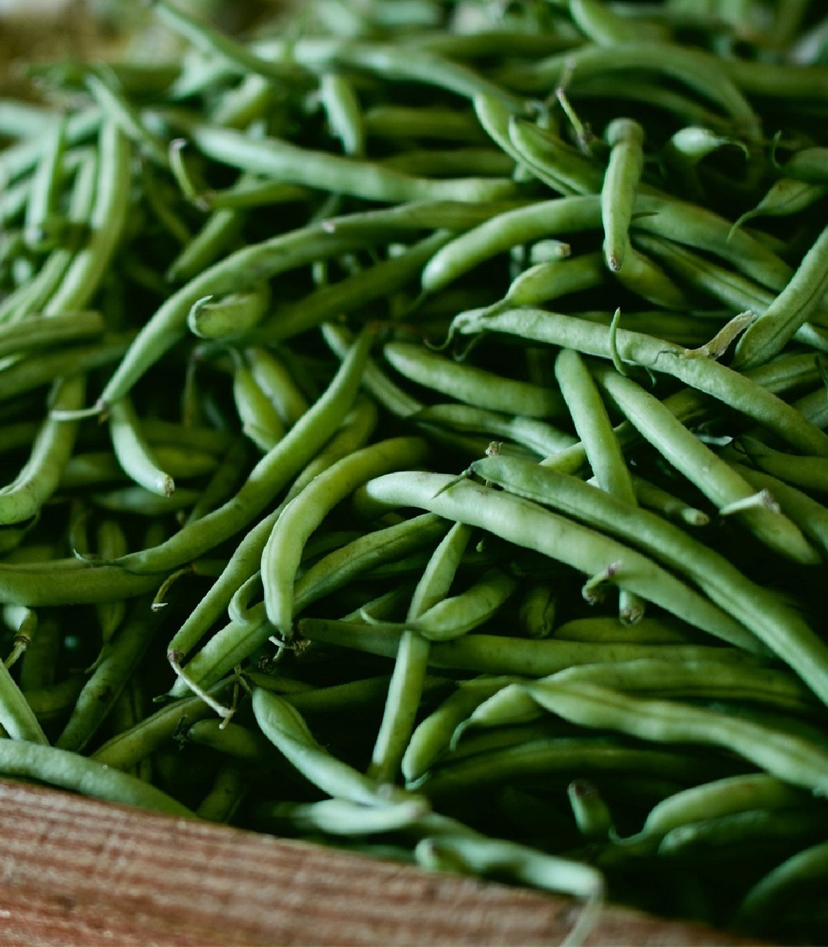 Fazuľa kríčková Negra - Phaseolus vulgaris - semená - 10 ks